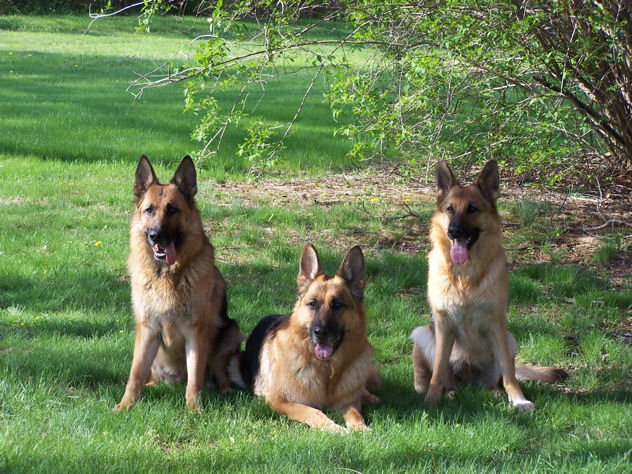 Karmen, Carlos and Kona in the spring