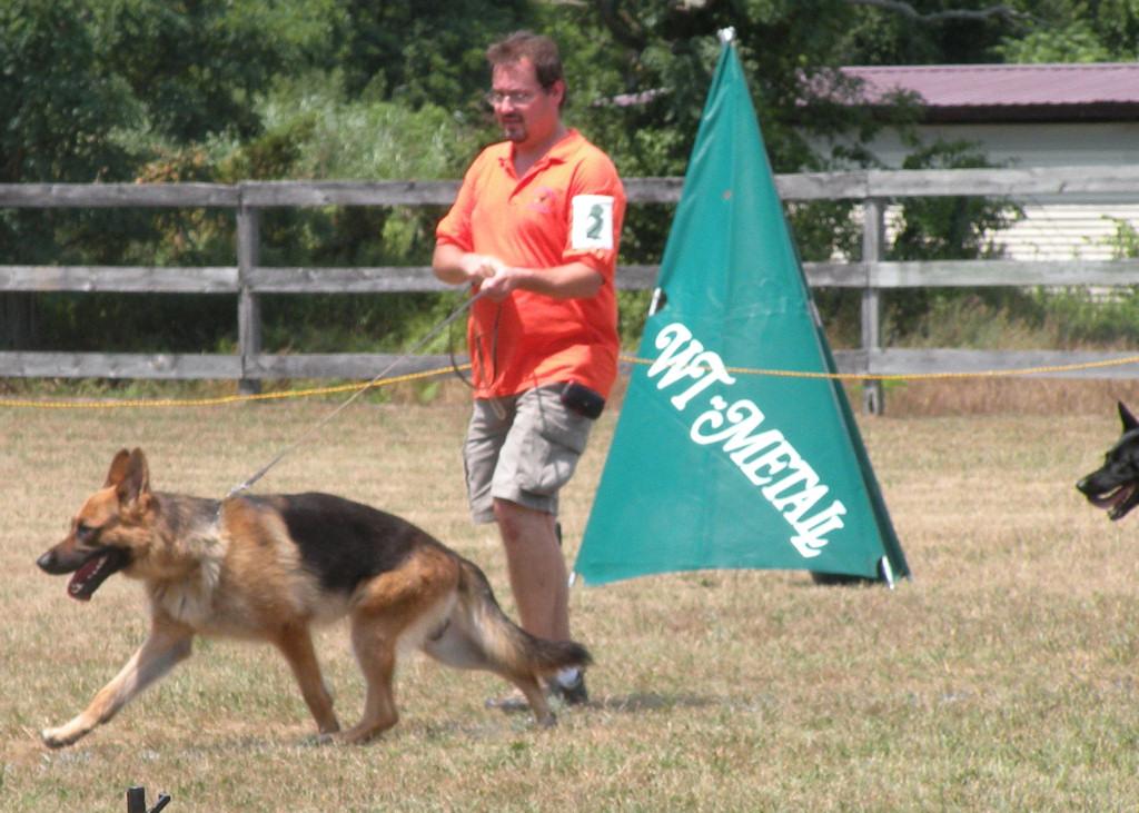 Alex vom Airmont at the 2010 GSSC Conformation Show